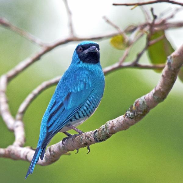 Muitas vezes Top 10: Animais da Amazônia NR89