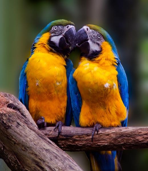top 10 animais da amazônia